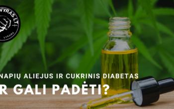 Kanapių aliejus cukrinio diabeto gydymui